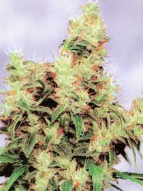Marihuana Stonehenge
