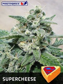 Super Cheese Positronics Seeds