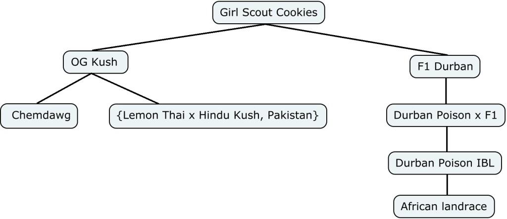 Mapa genético de Girl Scout Cookies