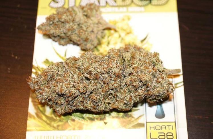 Marihuana Starbud curada de Hortilab