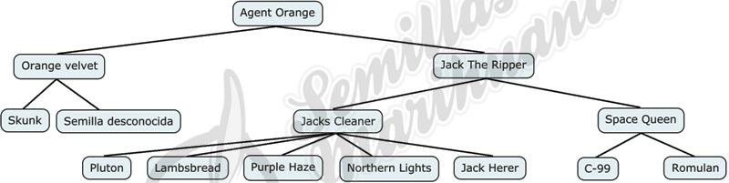 Mapa genético de Agent Orange de TGA Subcool