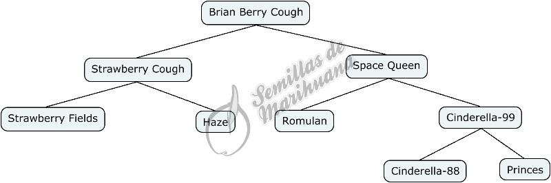 Mapa genético de Brian Berry Cough