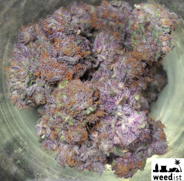 Cogollos de Grape Ape de Apothecary Genetics