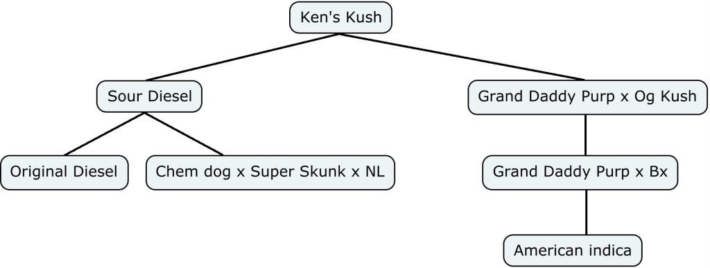 Mapa genético de Ken's Kush