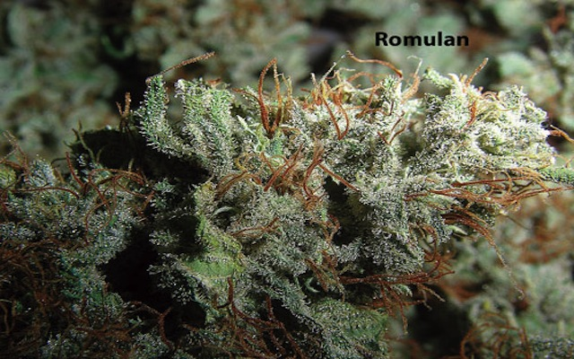 Marihuana Romulan