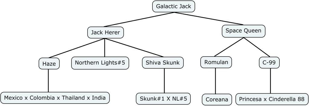 Mapa genético de Galactic Jack