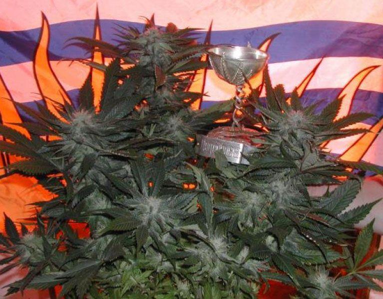 Marihuana BC God Bud