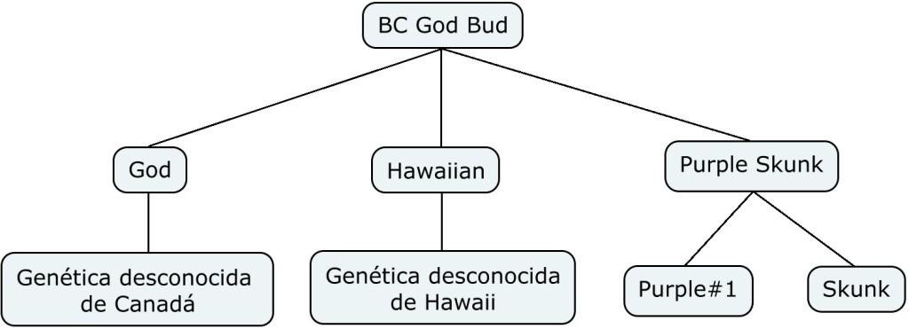 Mapa genético de BC Got Bud