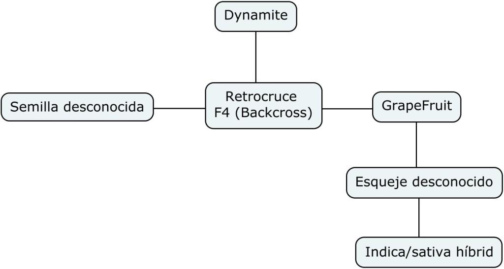 Mapa genético de Dynamite