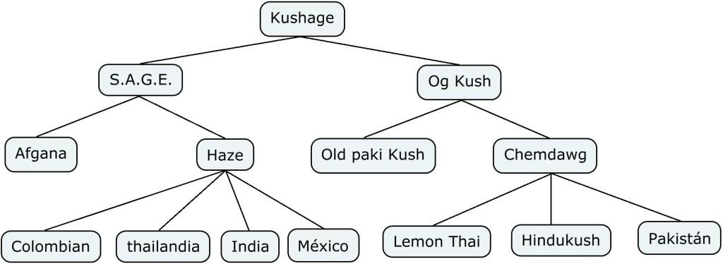 Mapa genético de la Marihuana Kushage
