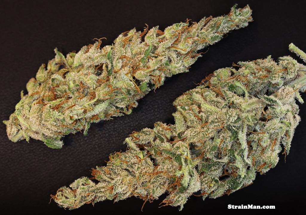 Marihuana Nevil's Wreck