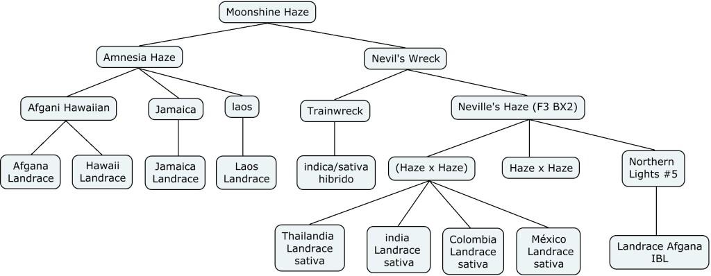 Mapa genético de Moonshine Haze