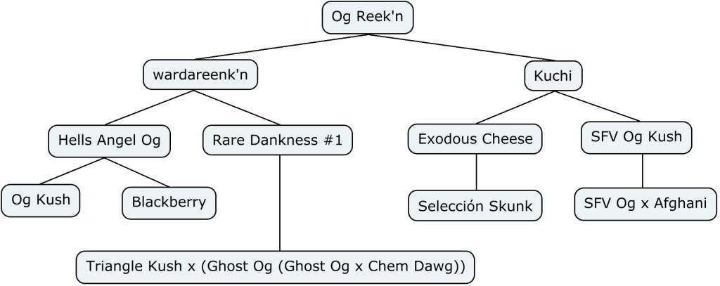 Arbol genético de Og Reekn