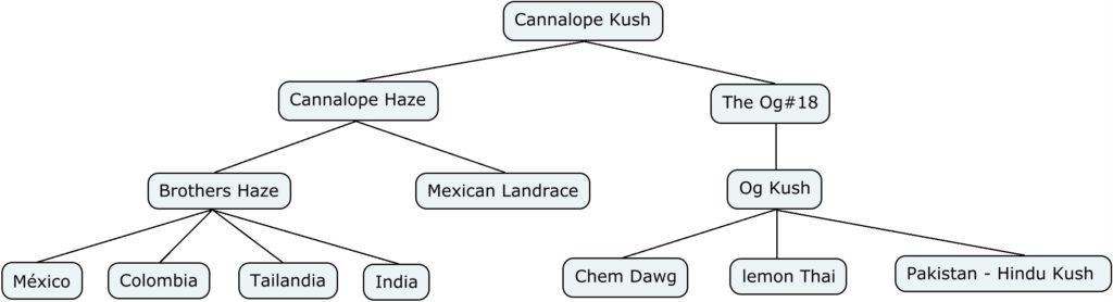 Genética de Cannalope Kush