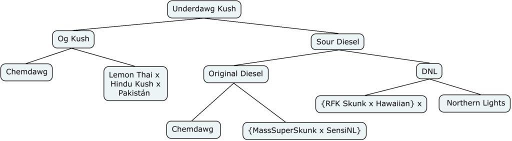 Esquema genético de Underdawg Kush