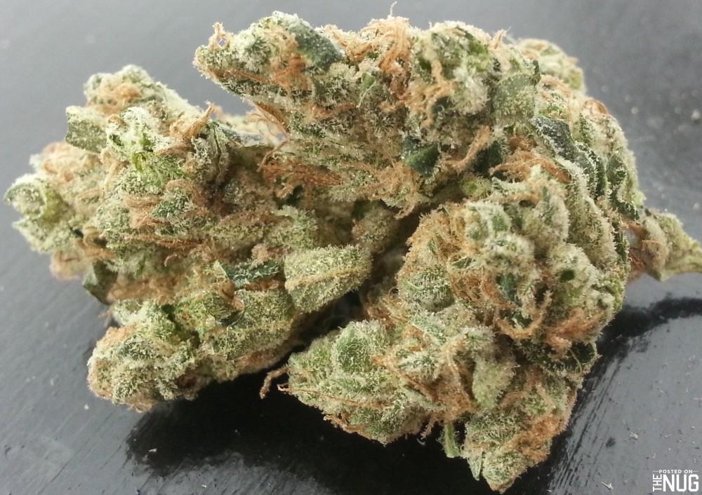 Cannabis sativa Sour Diesel