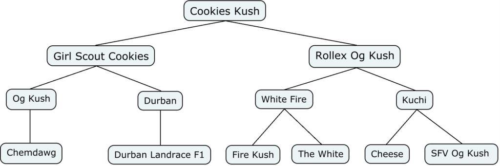 Mapa genético de Cookies Kush