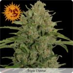 Triple Cheese de barney's Farm