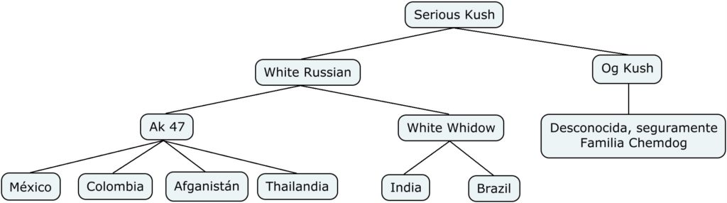 Mapa genético de Serious Seeds