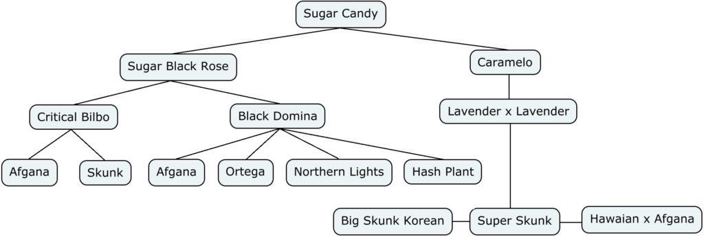 Mapa genético de sugar candy
