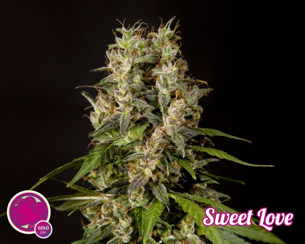 Sweet love en floración fenotipo A