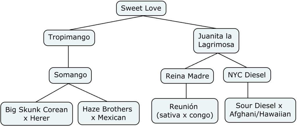 Mapa genético de Sweet love