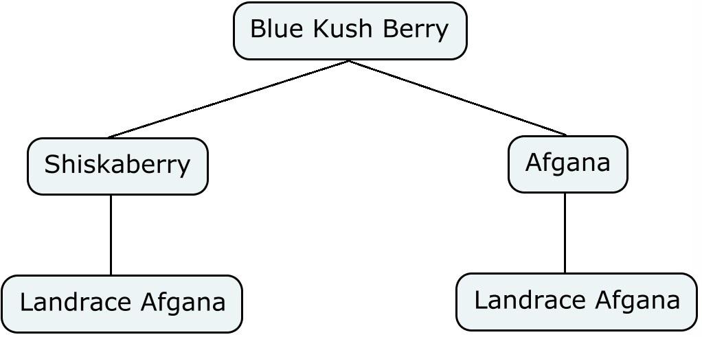 Mapa genético de nblue kush berry