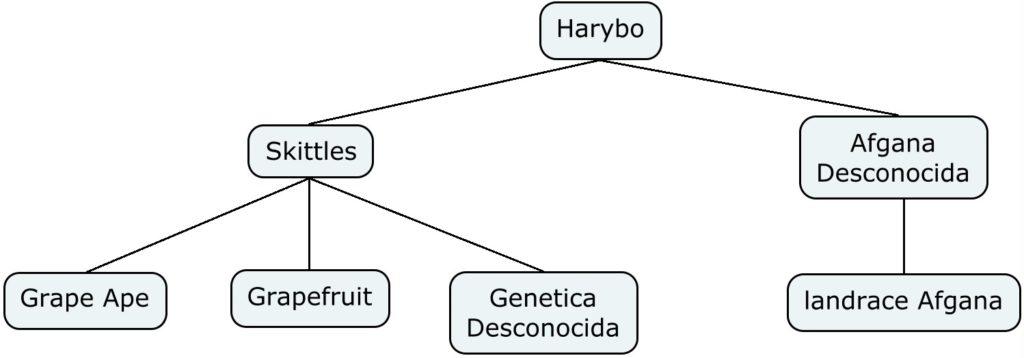 Mapa genético de Harybo
