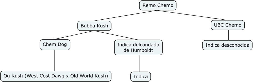 Mapa genético de Remo Chemo